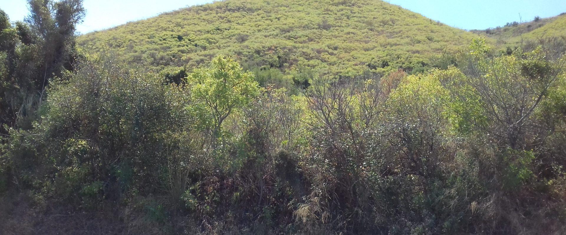 Terreno agricolo in vendita pressi Timpazzi