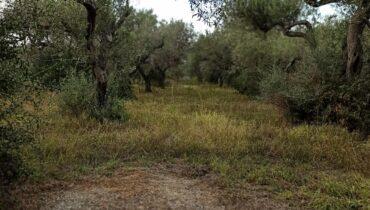 Terreno agricolo Spartà Messina